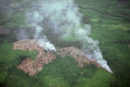 Deforestation「Smoke from Slash and Burn Agriculture」:スマホ壁紙(12)