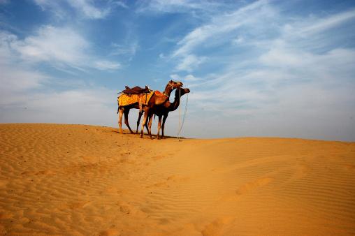 Rajasthan「Camels」:スマホ壁紙(1)