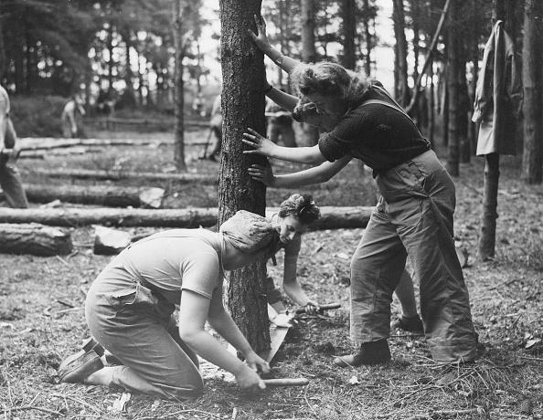 Cutting「Timber Corps」:写真・画像(11)[壁紙.com]