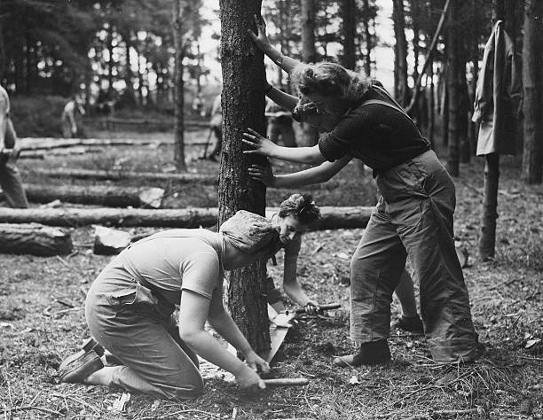 Timber Corps:ニュース(壁紙.com)