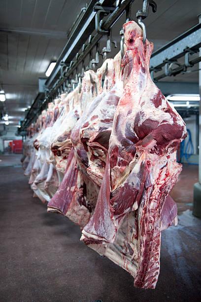 Cow Carcasses:スマホ壁紙(壁紙.com)