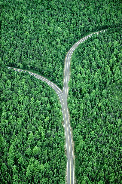 Fork in road through forest, aerial (Digital Composite):スマホ壁紙(壁紙.com)