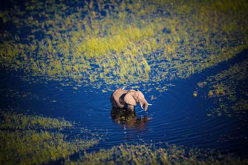 Delta「Botswana, Elephant walking in Okavango river at high water」:スマホ壁紙(15)