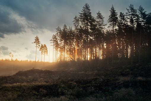 Deforestation「Soluppgång över kalhygge」:スマホ壁紙(6)