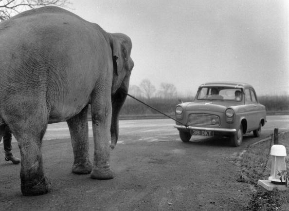 Northamptonshire「Breakdown Elephant」:写真・画像(14)[壁紙.com]