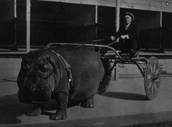 Baby Carriage「Hippo Power」:写真・画像(1)[壁紙.com]