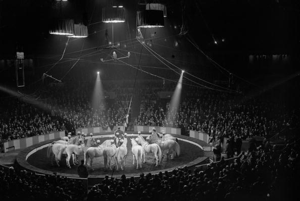 サーカス「Circus Performance」:写真・画像(17)[壁紙.com]