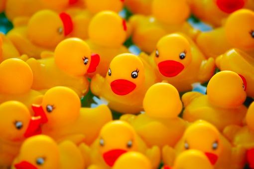おもちゃのアヒル「Yellow Rubber Ducks」:スマホ壁紙(13)
