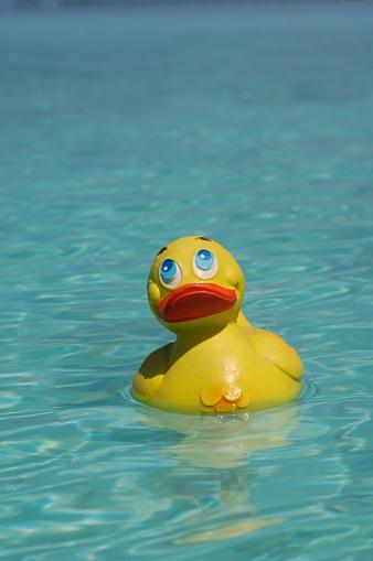 おもちゃのアヒル「Yellow rubber duck swimming in the sea」:スマホ壁紙(9)