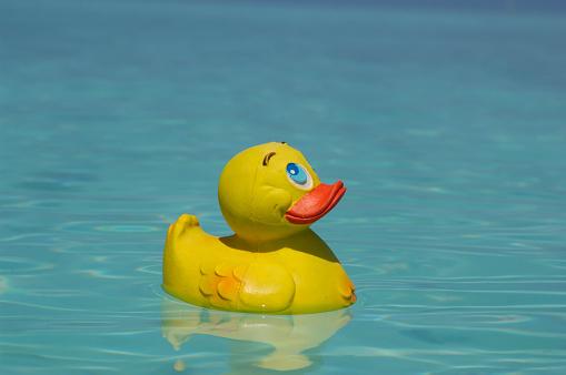 おもちゃのアヒル「Yellow rubber duck swimming in the sea」:スマホ壁紙(5)