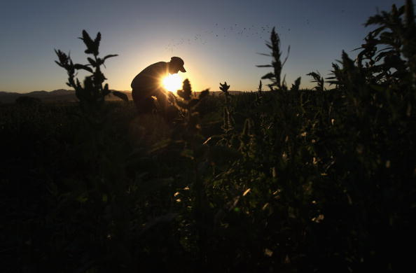 Agriculture「Migrant Workers Employed On Colorado's Largest Organic Farm」:写真・画像(2)[壁紙.com]