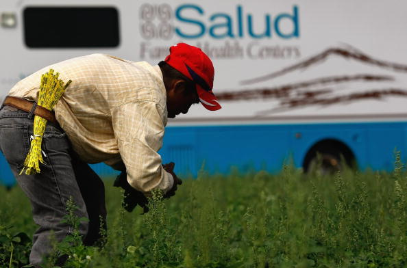 Spinach「Migrant Farm Workers Receive Free Health Care From Mobile Clinic」:写真・画像(13)[壁紙.com]
