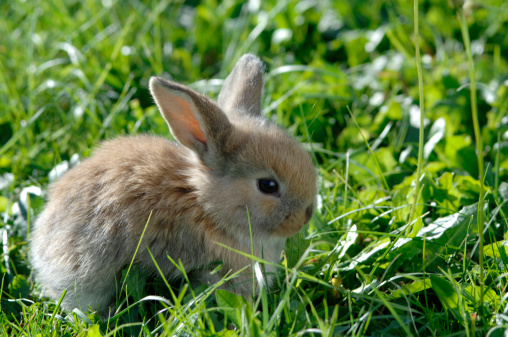 Baby Rabbit「Rabbit in meadow, close-up」:スマホ壁紙(17)