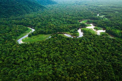 Amazon River「Atlantic Forest in Brazil, Mata Atlantica」:スマホ壁紙(4)
