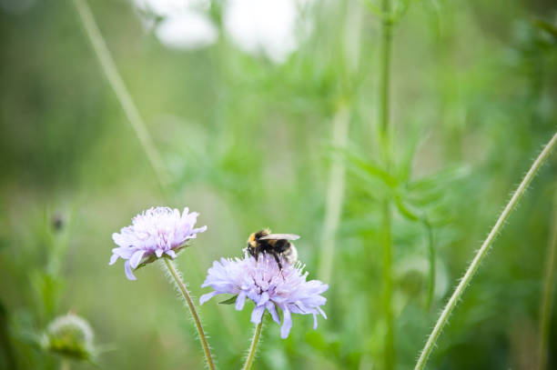 Bees pollinating flowers in a meadow.:スマホ壁紙(壁紙.com)