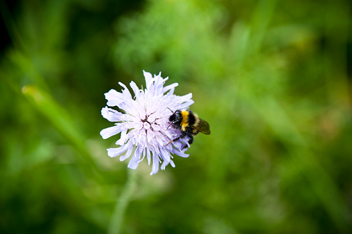 Perthshire「Bees pollinating flowers in a meadow.」:スマホ壁紙(16)