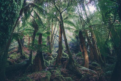 Rainforest「Enormous fern forest in National Park」:スマホ壁紙(16)