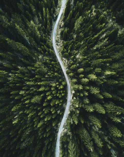 confirous tree forest aerial view in north america:スマホ壁紙(壁紙.com)