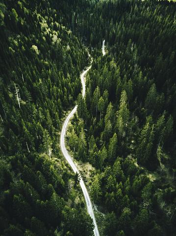 常緑樹「confirous の木の森林北アメリカの空撮」:スマホ壁紙(3)