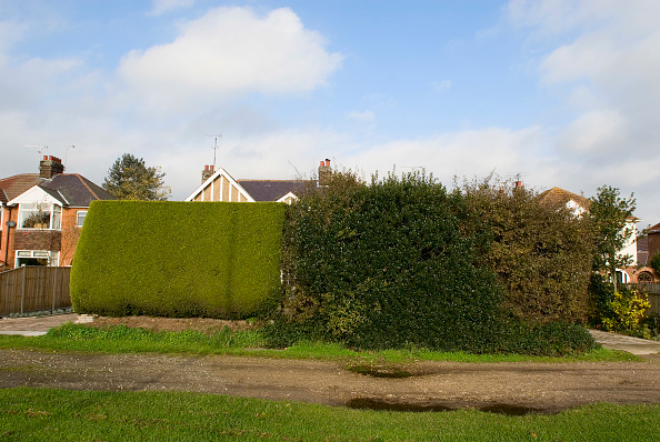 Behind「Tidy and unkempt hedge」:写真・画像(5)[壁紙.com]