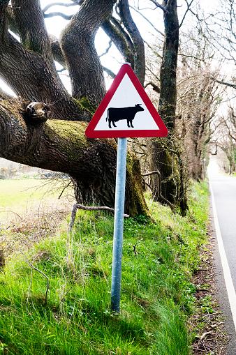 Isle of Man「Roadside traffic warning sighn, beware of cattle」:スマホ壁紙(19)
