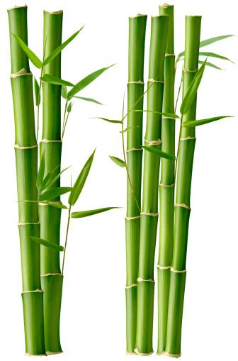 Bamboo「竹の美」:スマホ壁紙(6)