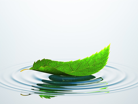 Concepts & Topics「Leaf On The Water」:スマホ壁紙(9)