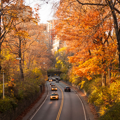 November「Road with yellow taxi's in Central Park, Manhattan, New York City」:スマホ壁紙(18)