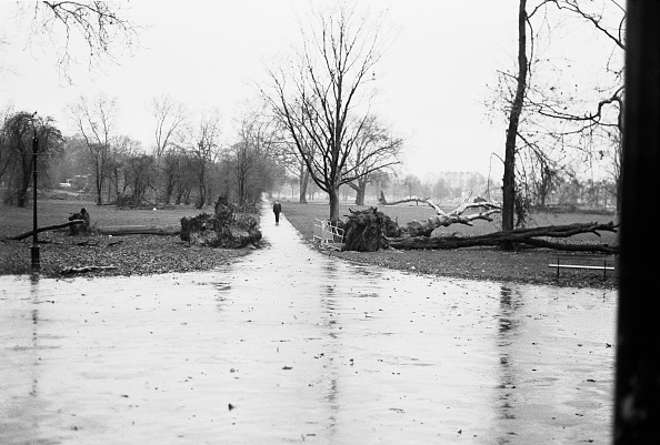 Footpath「Clapham Common After the Great Storm 1987」:写真・画像(4)[壁紙.com]