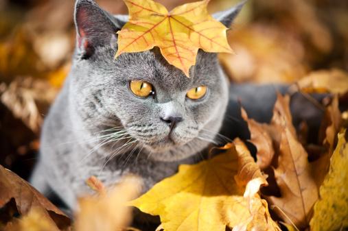 ショートヘア種の猫「かわいい猫 oudoors」:スマホ壁紙(10)