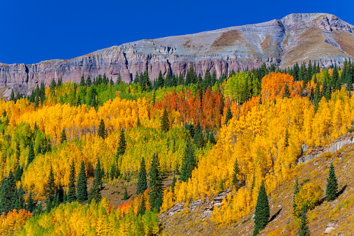 Aspen Tree「Fall Color,San Juan Mtns., Colorado」:スマホ壁紙(9)