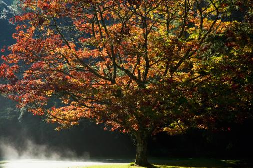 UNESCO「fall colors in muckross gardens in killarney national park」:スマホ壁紙(15)