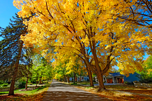 Lake Huron「Fall colors in autumn with Maple Tree」:スマホ壁紙(9)