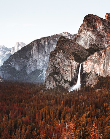 Grove「yosemite national park」:スマホ壁紙(9)