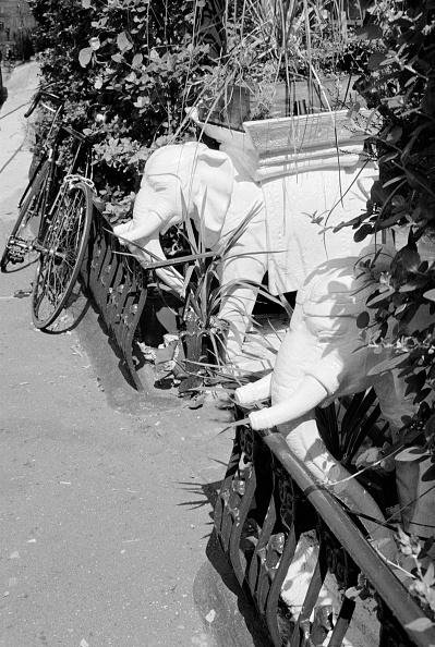 Ornamental Garden「Two Ornamental Elephant Planters In A Highgate Garden」:写真・画像(1)[壁紙.com]
