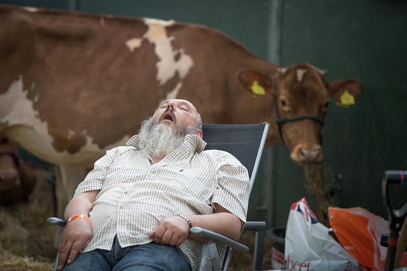 Sleeping「UK's Largest Dairy Show Takes Place At The Bath And West Showground」:写真・画像(10)[壁紙.com]