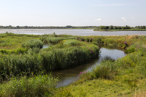 North Brabant「Landscape of restored part of Dutch Biesbosch National Park」:スマホ壁紙(1)