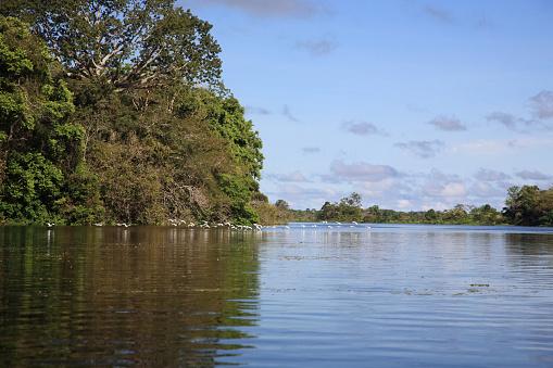 Amazon Rainforest「Landscape of Amazon Jungle river」:スマホ壁紙(17)