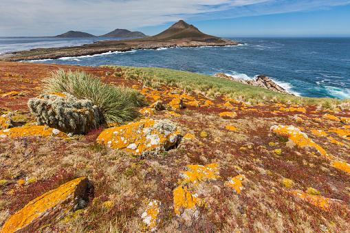 Falkland Islands「Landscape on Steeple Jason Island」:スマホ壁紙(16)