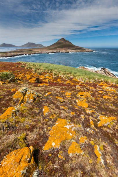 Landscape on Steeple Jason Island:スマホ壁紙(壁紙.com)