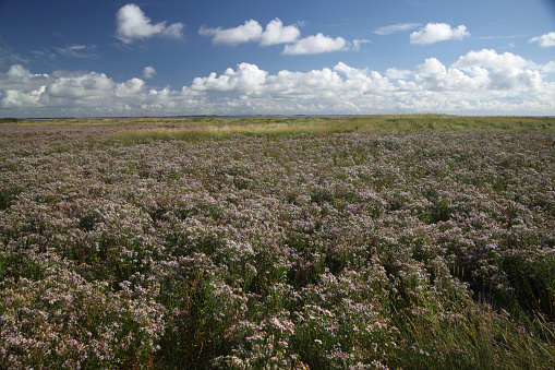 flower「landscape on Amrum island」:スマホ壁紙(11)