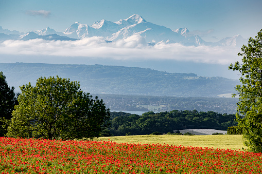 Vaud Canton「Landscape of Mont Blanc with red poppies, Givrins, Switzerland」:スマホ壁紙(18)