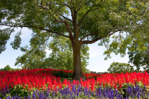 Ash Tree「Ash tree with planted flower bed.」:スマホ壁紙(15)