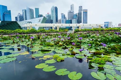 Water Lily「Water garden at Art Science Museum, Singapore」:スマホ壁紙(5)