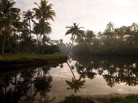 アラビア海「Sunrise and palm trees, Kerala, India」:スマホ壁紙(15)