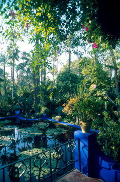 Water Lily「Destination: Marrakesh」:写真・画像(10)[壁紙.com]