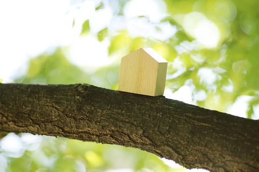 Japan「Model house on a tree」:スマホ壁紙(0)