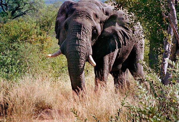Kruger National Park:ニュース(壁紙.com)