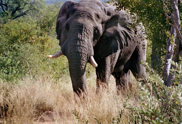 Animals Hunting「Kruger National Park」:写真・画像(7)[壁紙.com]