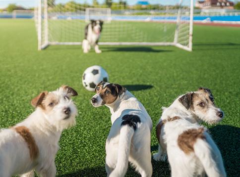 Sportsperson「Terriers Team is Soccer Game Winner」:スマホ壁紙(17)